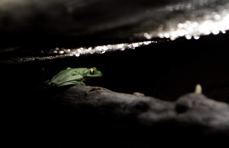 Frog Nature green frog