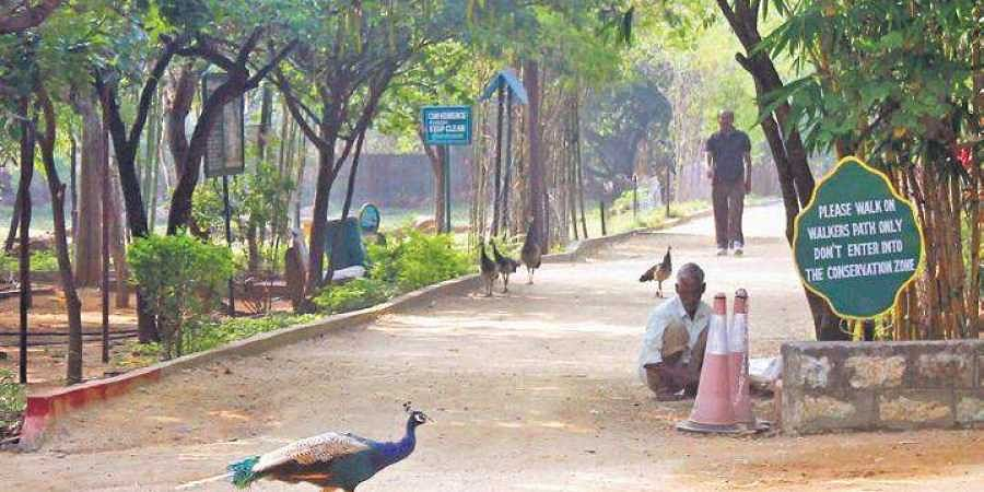 MoEF direction on KBR park brings cheer among activists- The
