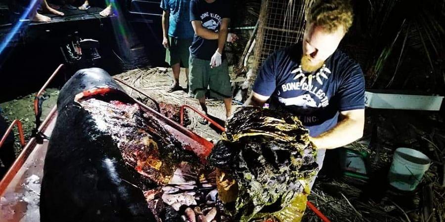 Dead whale, Plastic waste