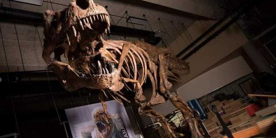 Tyrannosaurus rex discovered in Canada is world's biggest