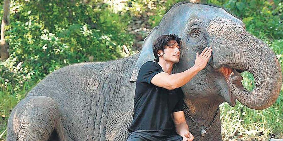 A still from Vidyut Jammwal-starrer 'Junglee'.