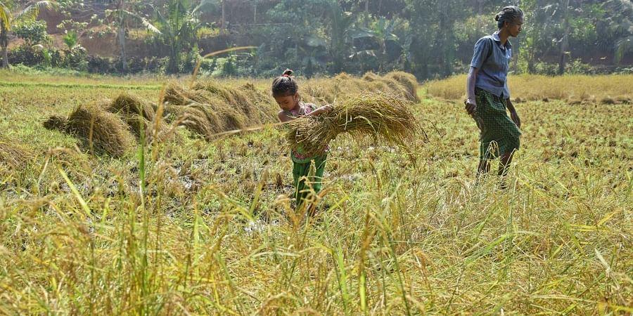 Kerala Farmers