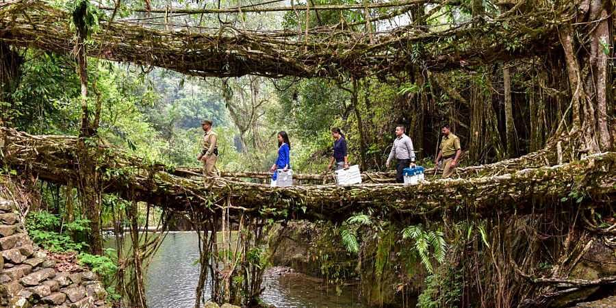 An EVM awareness team uses the famous double-decker living root bridges to traverse polling stations at Nongriat in Shillong. (Photo | PTI)