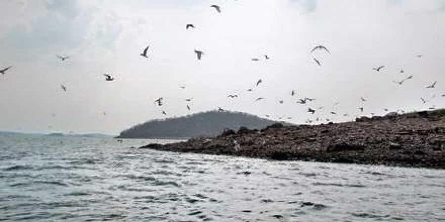Bhadra Reserve backwaters