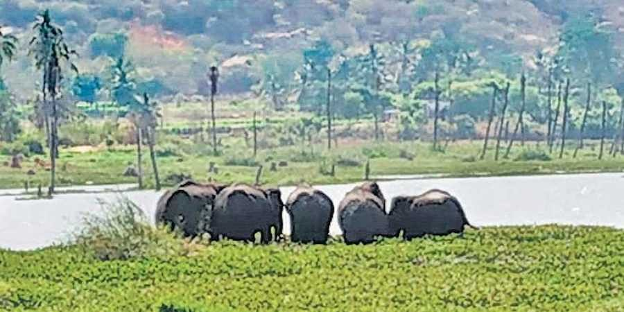 With campaigning on in full swing, farmers are, however, busy filing complaints of elephant invasions in their villages, keeping forest officials on their toes