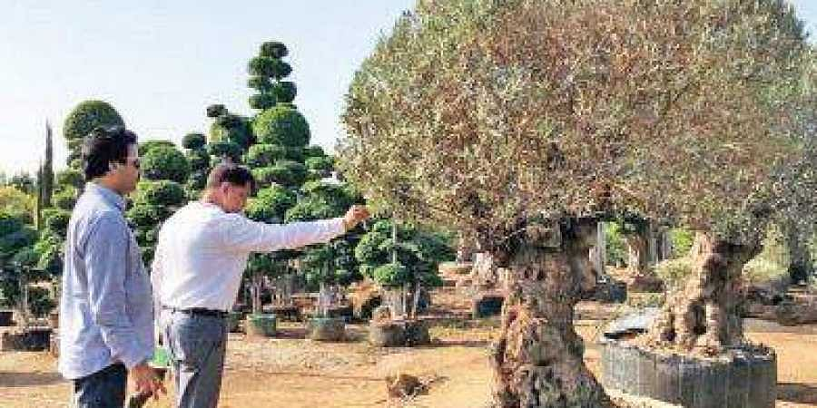 MAUD to plant unique trees across Hyderabad- The New Indian
