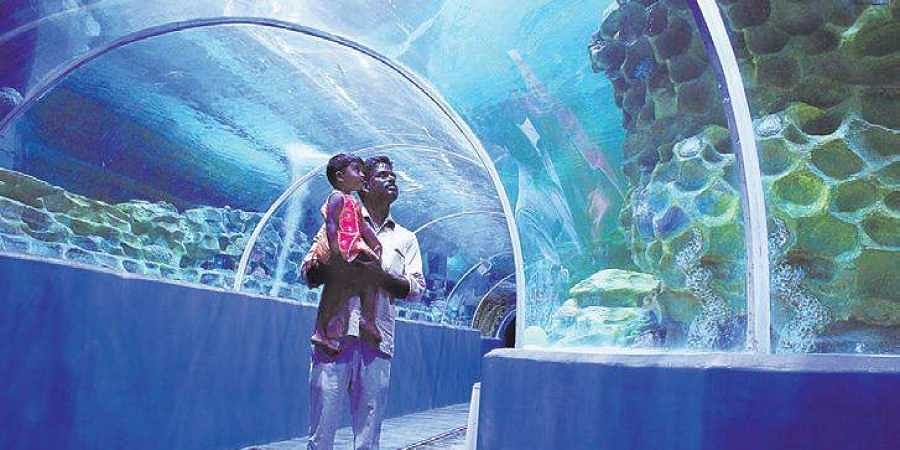 VGP brings exotic marine life on land- The New Indian Express