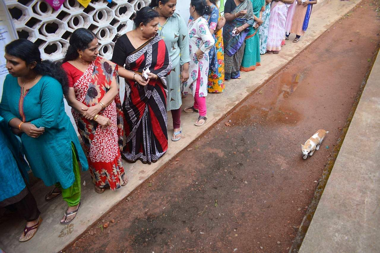 A cat is the centre of attraction at Aswas Kendram polling booth in Thiruthiyadu, Kozhikode. (Photo | Manu R Mavelil)