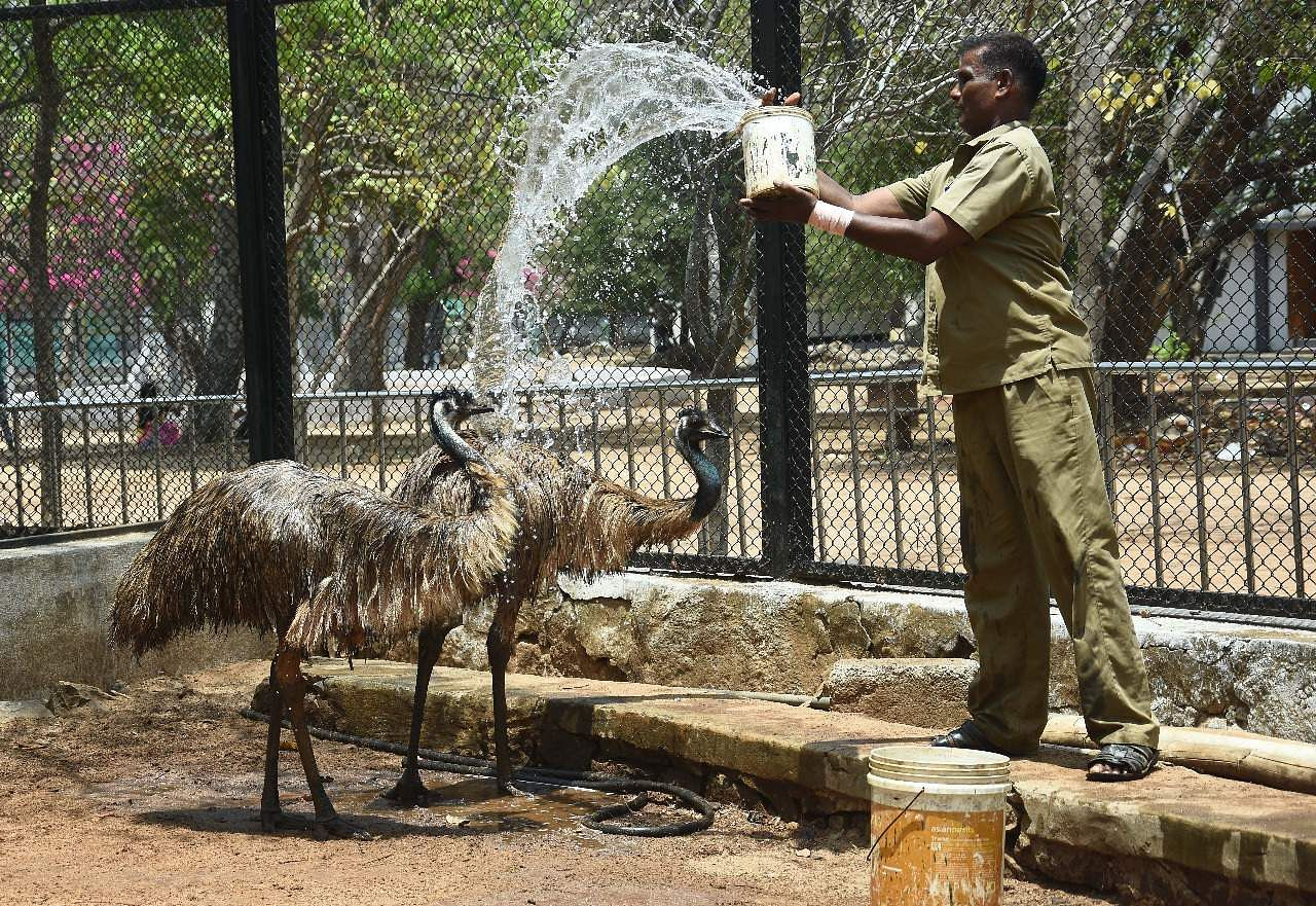 With the temperature rising day by day, a worker at the Guindy National Park sprays water on birds to help them beat the scorching heat, in Chennai. (Photo | Ashwin Prasath)