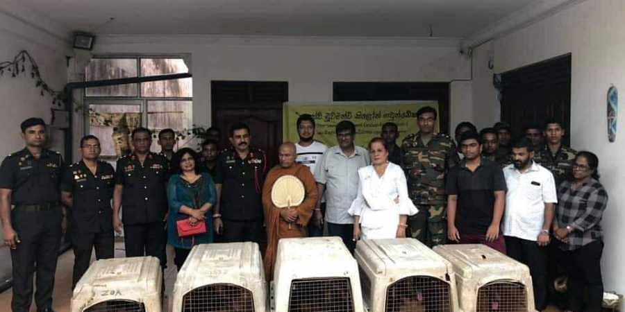 Dr Shiru Wijemanne donated the German Shepherd dogs to the army