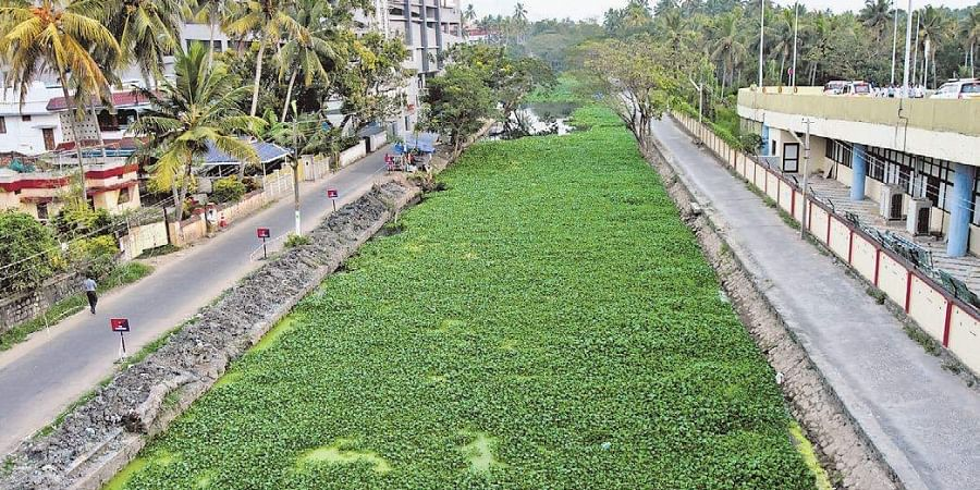 The Parvathy Puthanar canal is still plagued by water hyacinth and waste