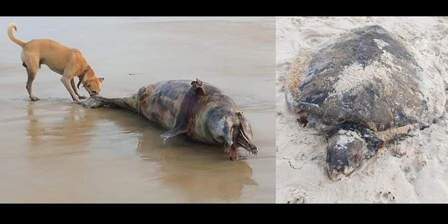Dead turtle, Dead dolphin