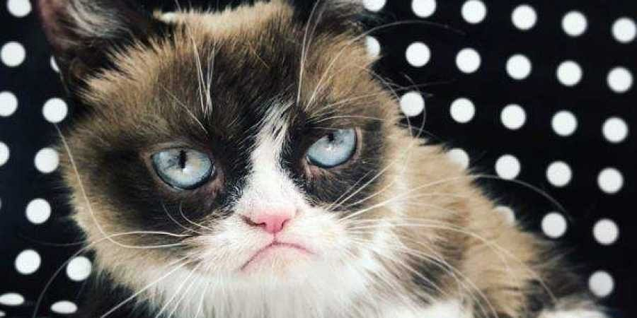 The internet sensation Grumpy Cat, owned by Tabatha Bundesen from Morristown, Arizona has died, aged seven. (Photo | Twitter)