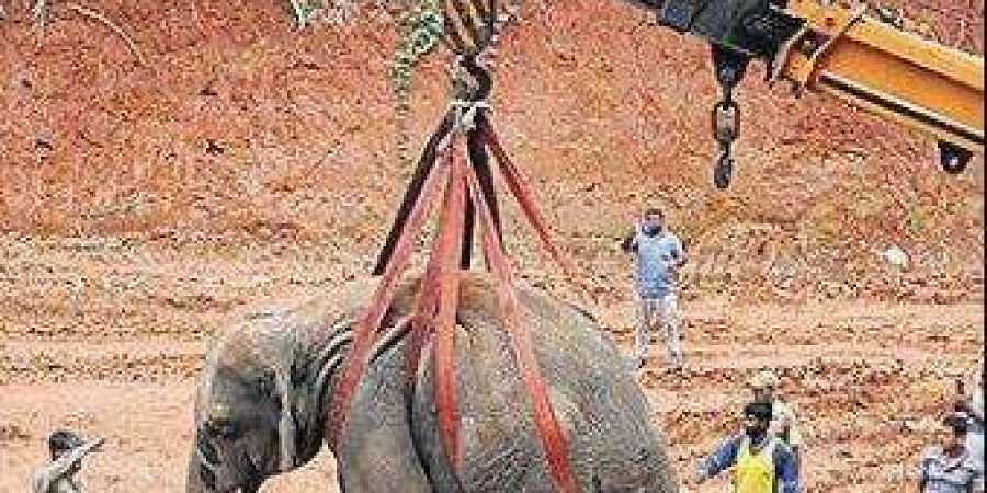 The elephant being lifted by a crane