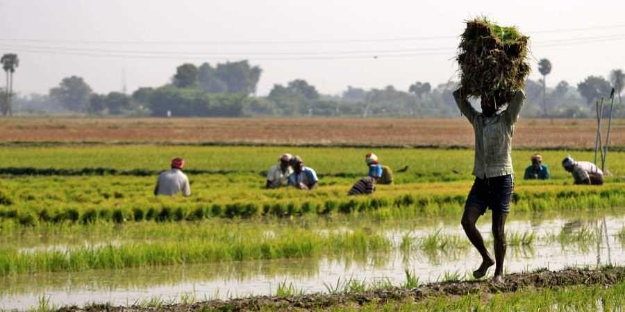Farmers, Agriculture, Tamil Nadu