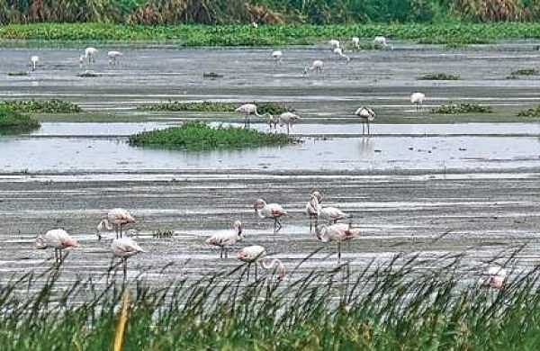 In parched Chennai, a few watering holes for birds