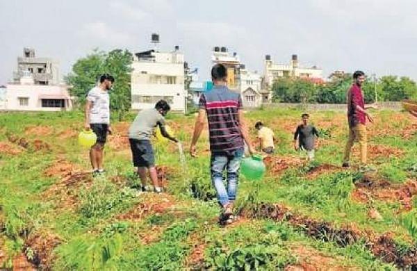 Bengaluru University to wear new look with 'fruit garden'