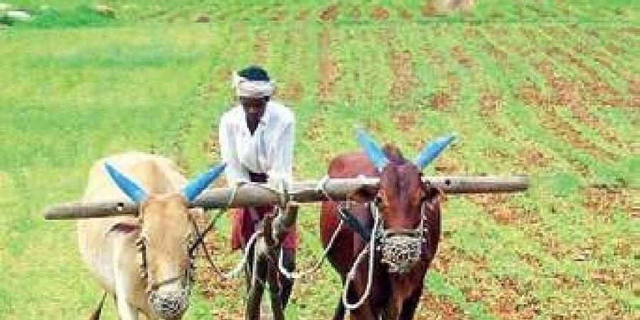 Farmer ploughing land.