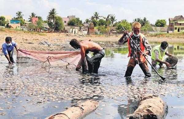 Workers removing dead fish from Thamaraikulam lake on Tuesday | Nigamanth P