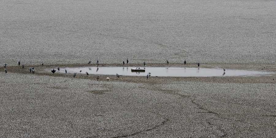 Chennai water crisis, Chennai drought