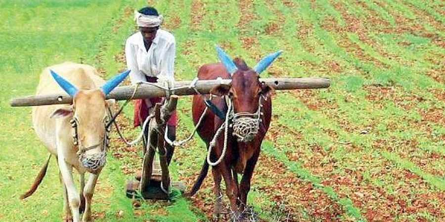 As of now, farmers are in urgent need of money as they plan to get started with Kharif sowing.