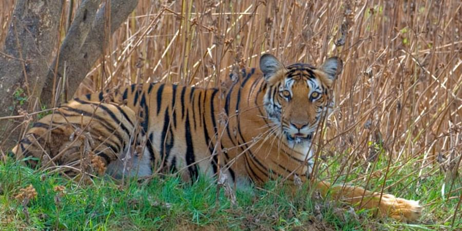 Nagarhole Tiger Reserve in Kodagu to get bigger- The New Indian Express