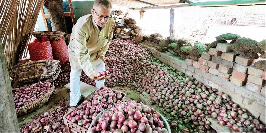 Kuldeep Singh of Jaunti village shows the yield of organic onions from his farm