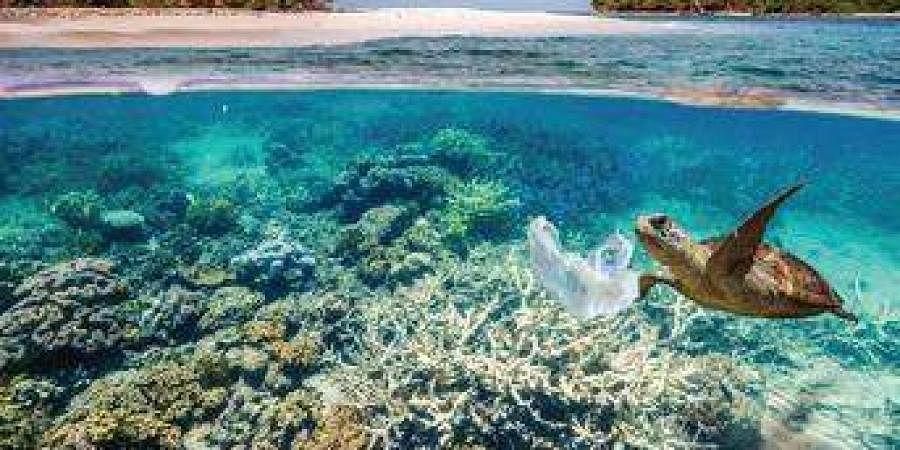 ocean, sea, underwater life, oceanic life