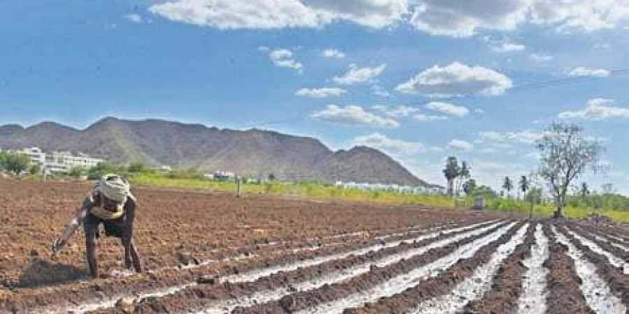 A farmer prepares his land for farming ahead of the Monsoon at Undavalli near Vijayawada.
