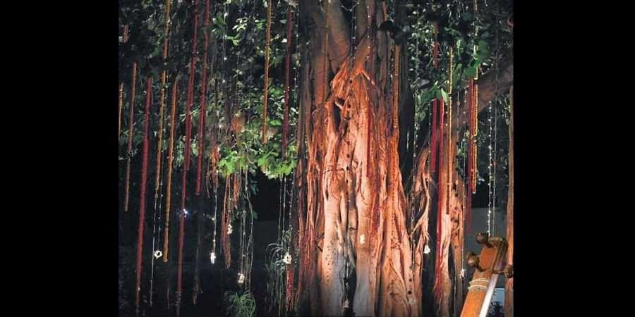 Under the Banyan tree of a full moon night