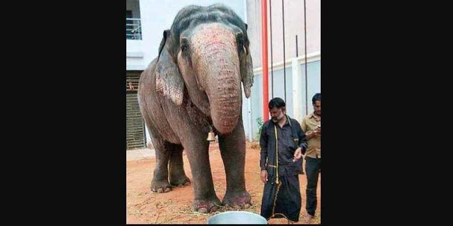 Elephant Sudha arrives in Hyderabad. (Photo   EPS)