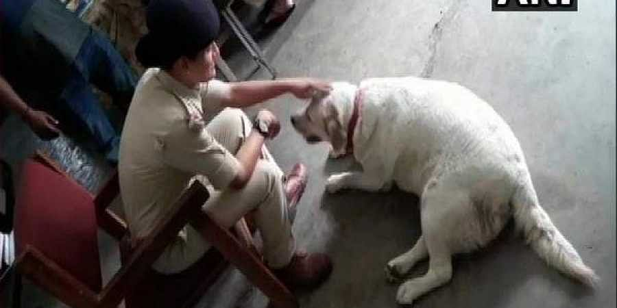 Madhya Pradesh cops take care of pet dog after owners go to