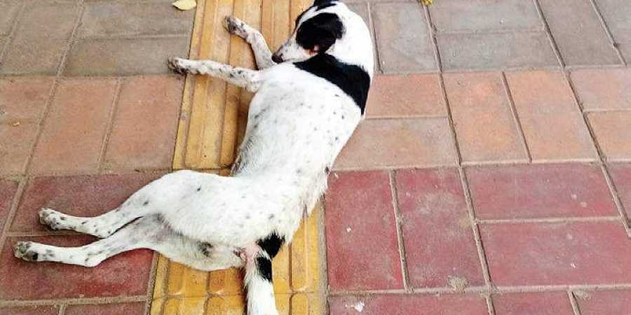 Stray dogs have been attacking visually impaired students in DU, some students claim.