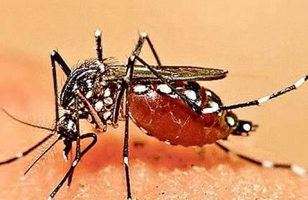 Bengaluru sees a sharp rise in dengue cases