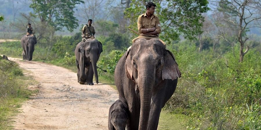 Kaziranga National Park is bound by the Brahmaputra on its northern end.