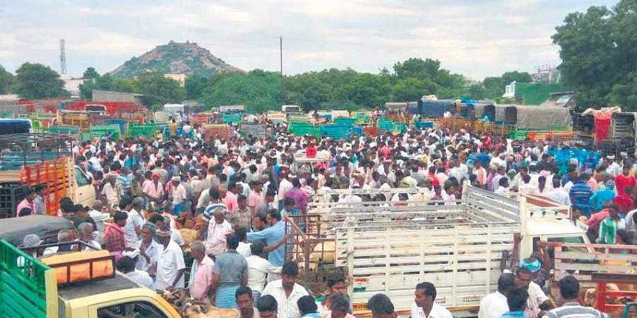 Bakrid jackpot for Gingee cattle market as sales touch Rs 5