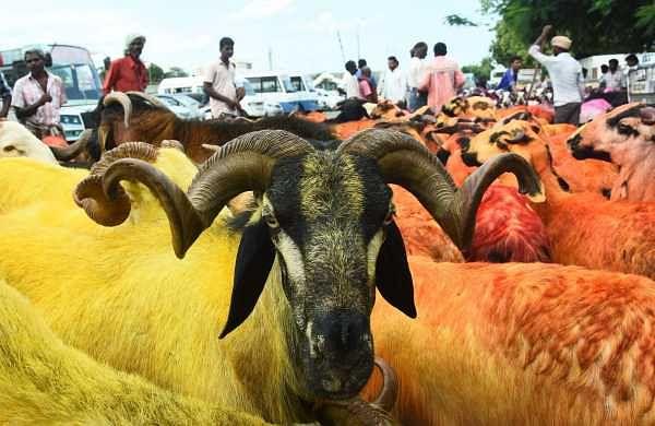 Aadi monsoon festival and Bakr Eid wave go together inChennai