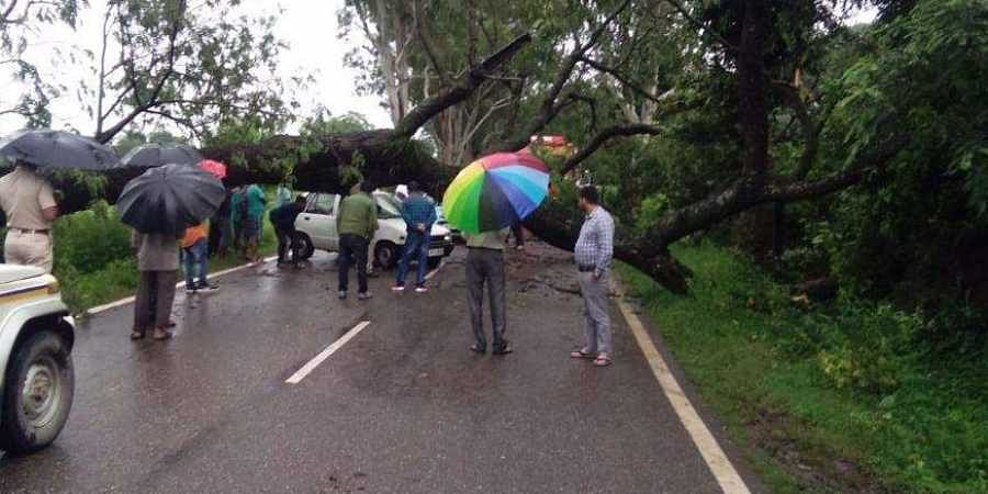 National Highway (NH) 154 blocked after a tree fell on the highway near Tattal, Nurpur in Kangra district