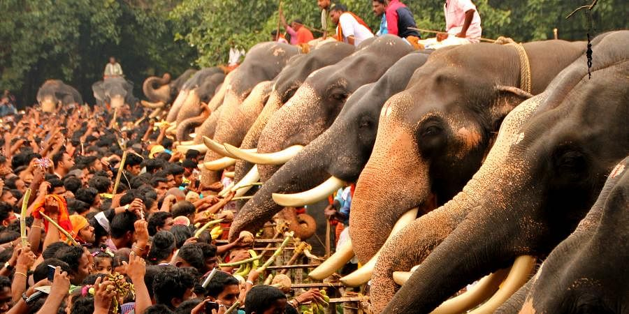 Processions cause stress, poor health in elephants: Research