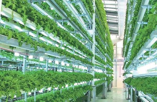 Hydroponics: Growing plants soil-free