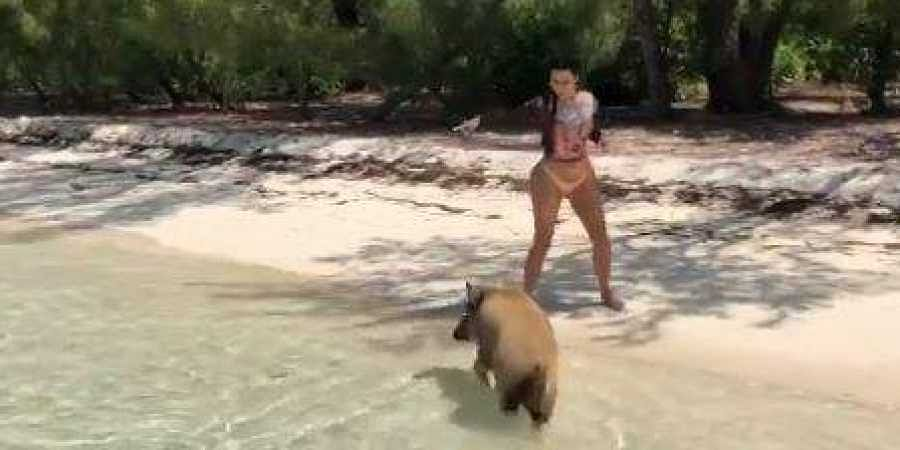 Kim Kardashian recently had an encounter with a pack of feral pigs in the Bahamas.