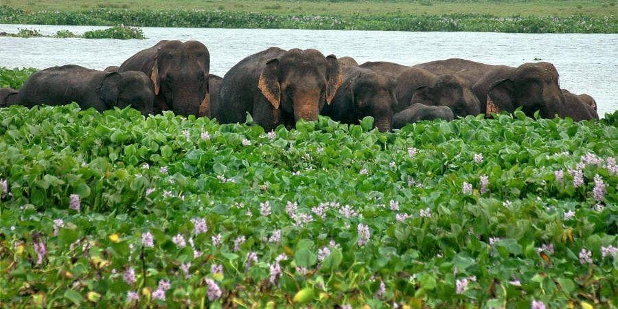Deepor Beel, Assam