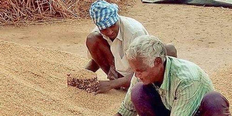 Paddy farmers in Odisha