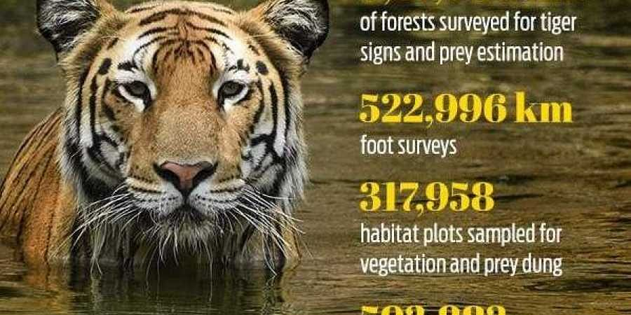 26,838 camera traps have been set up for tigers in 141 locations