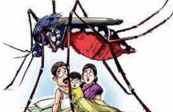 Deadly dengue: Bengaluru hospitals play safe, stock up on platelets