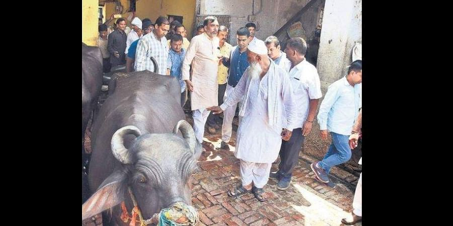 After listening to a petition regarding the chaos caused by stray cattle on the roads, the high court had asked the government, the civic agencies and other departments to find out solutions.