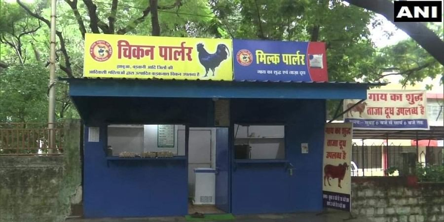 Kadaknath chicken is currently sold at the rate of Rs 900 per kg.