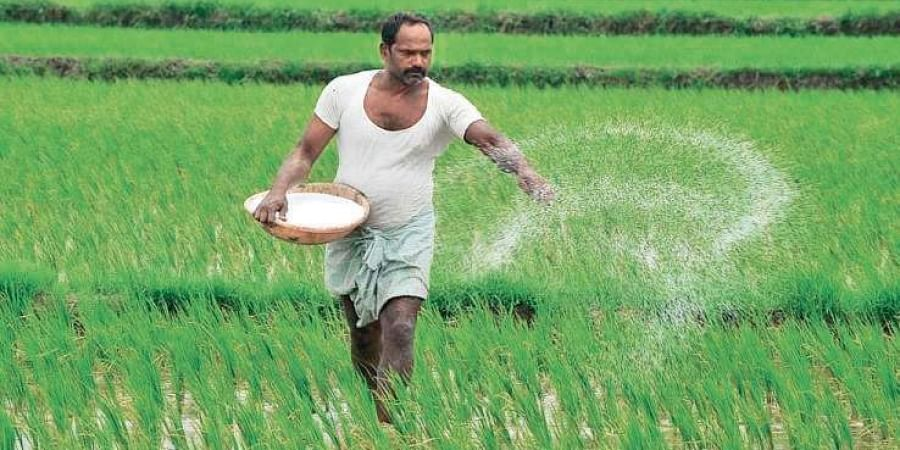 A farmer sprinkling fertiliser on his land