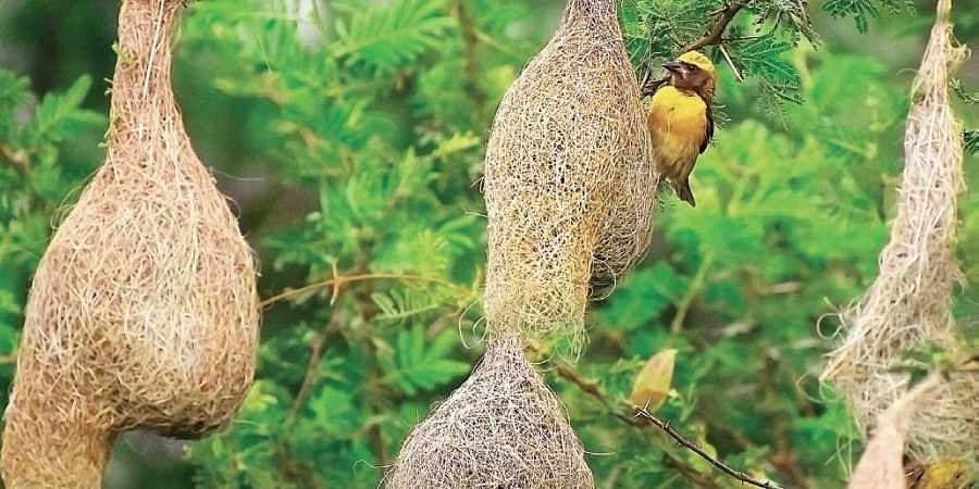 Bengalureans will celebrate 'happy bird day' on Sept 28