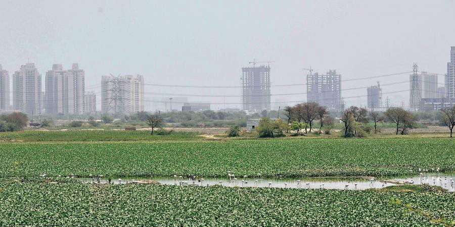 A wetland in Delhi
